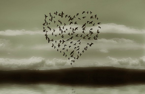 oiseauxcoeur.jpg